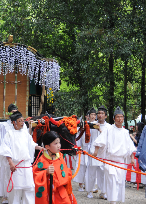 An ox pulling a large cart towards Shimogamo Shrine at the Aoi Matsuri.